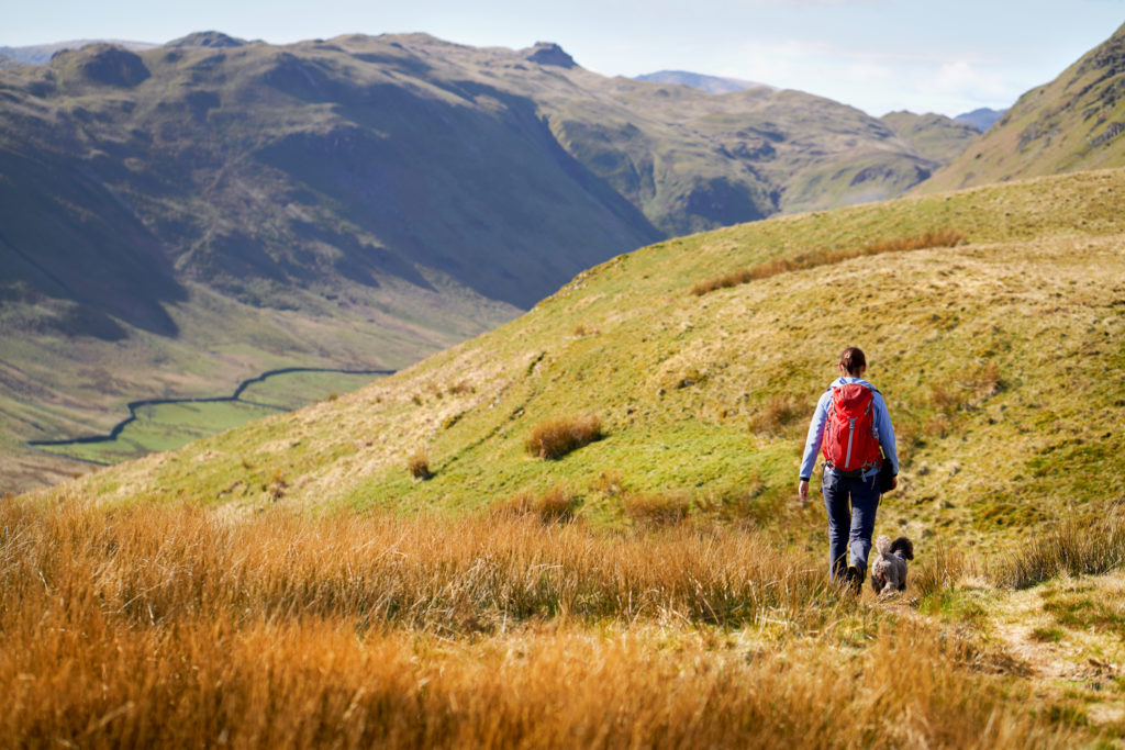 A hiker and their dog walking along Low Moss Gill below the summits of Place Fell and High Dodd in the Lake District, UK.