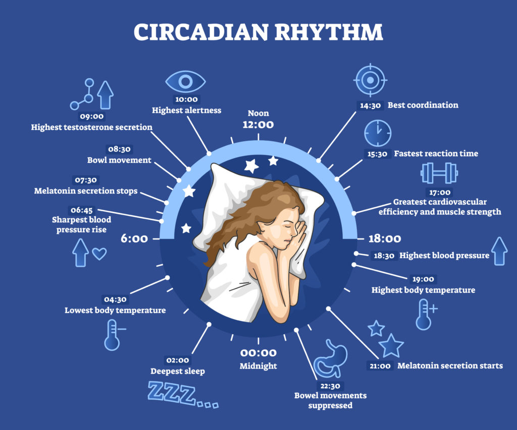Circadian rhythm as educational natural cycle for healthy sleep and routine.